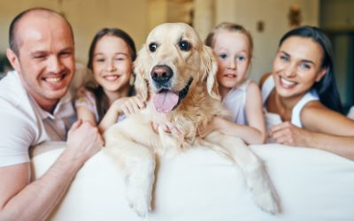 The Benefits of Dog Home Boarding