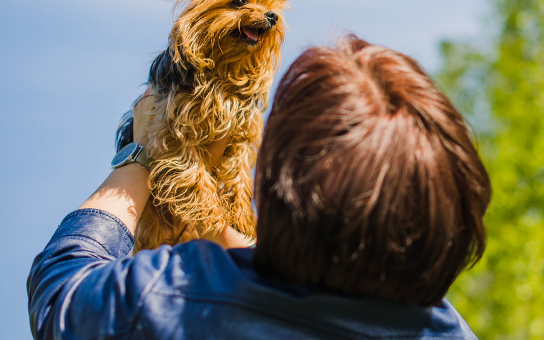 Identifying Your Dogs Emotions by their Body Language