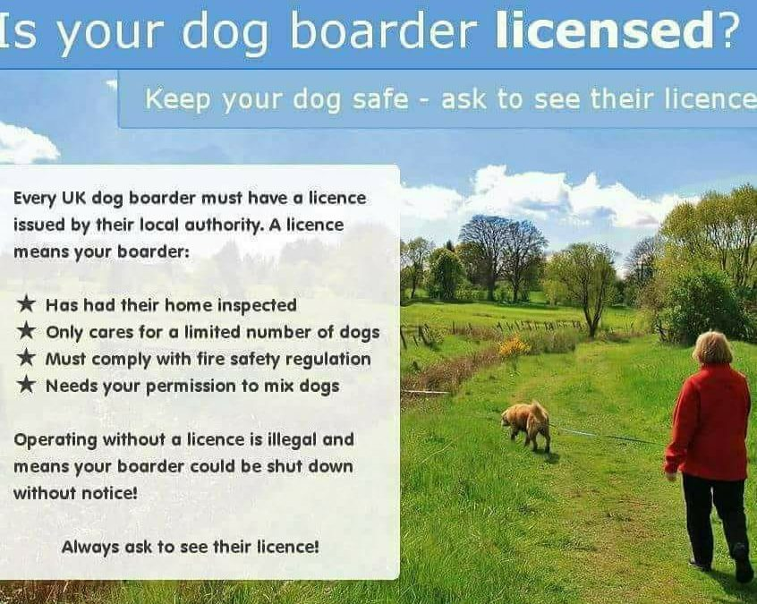 Why should you only use a licensed dog home boarder?